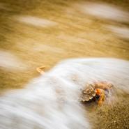 Wangerooge - Krabbe geflutet